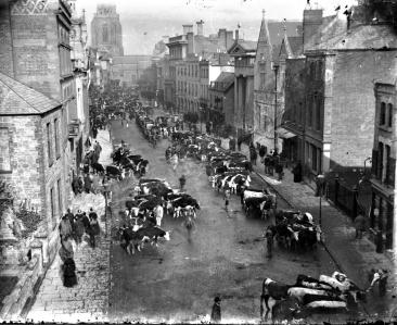 Cattle on Broad Street 1881