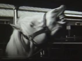 Horse Auction